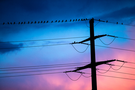 Birds on high voltage cables at sunset, blue sky on background Banque d'images - 108985139