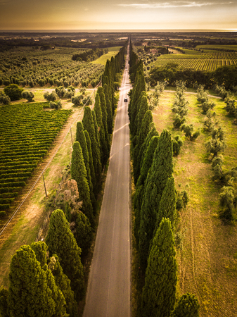 Cypress alley with rural country road, Tuscany, Italy Banco de Imagens