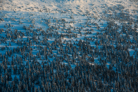 Winter mountain forest - alpine scenery with hills and trees covered with snow 写真素材
