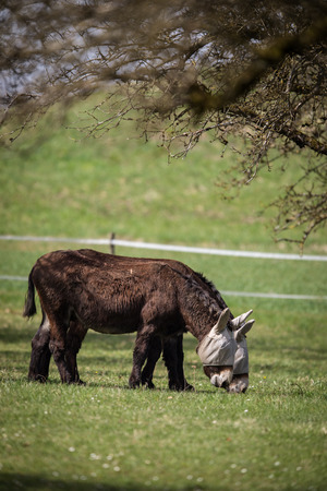 Two donkeys definitely not talking to each other