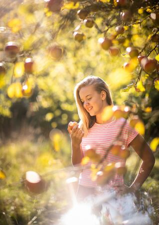 Süßes Mädchen pflückt Äpfel in einem Obstgarten und hat Spaß beim Ernten der reifen Früchte der Arbeit ihrer Familie (Farbbild)
