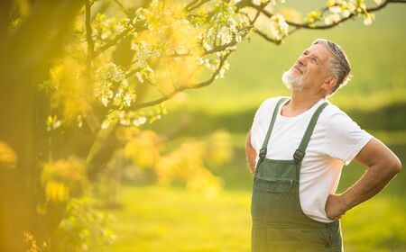 Portrait of senior man gardening, taking care of his lovely orchard, ejoying actively his retirement Stockfoto - 126735179