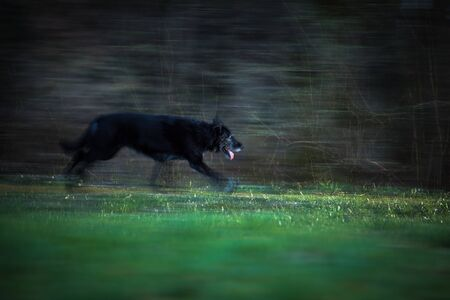 Black dog running through woods at night - motion blur technique used to convey movement