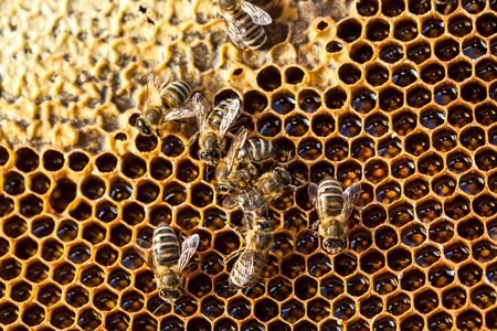 Macro shot of bees swarming on a honeycomb Banco de Imagens