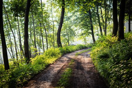 lovely forest path in early morning sunshine (shallow DOF; color toned image)