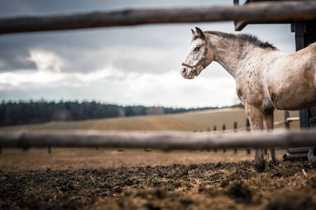 Horse at a stable (color toned image; shallow DOF)
