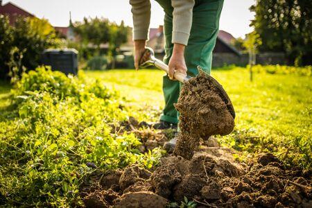 Jardinier senior jardinant dans son jardin en permaculture - préparer le terrain pour l'hiver à la fin de l'été Banque d'images