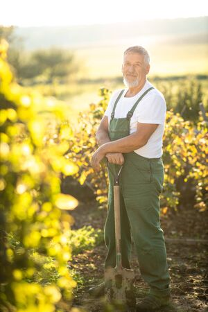 Senior gardener gardening in his permaculture garden - holding a spade