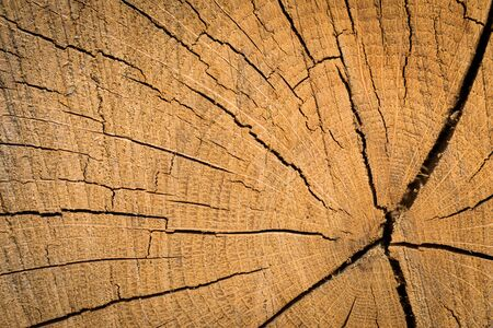 Wood texture background surface. Natural wood texture. Timber background of wood texture.