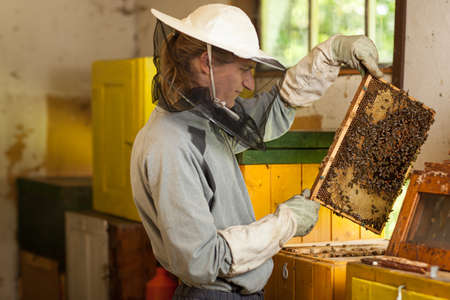 Beekeeper in an apiary holding a frame of honeycomb covered with swarming bees 版權商用圖片
