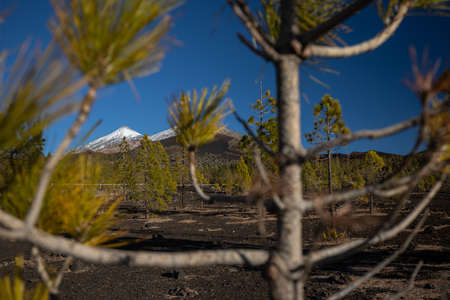 Colorful scenic landscape of moon rise in Tenerife national park of Teide.
