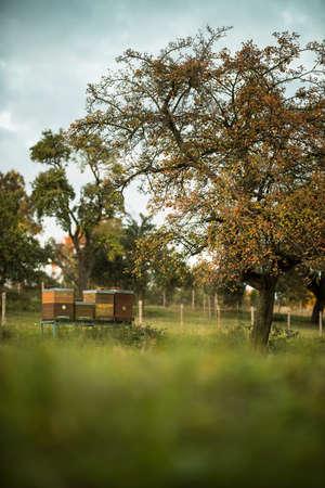 Lovely beehives amid splendid orchard