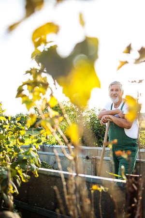 Senior gardenr gardening in his permaculture garden