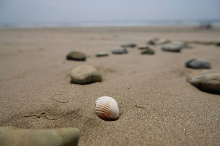 Close up of shell on sandy beach with sea and sky background 写真素材