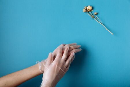 Woman's hand in a white medical gloves is reaching to the withered white Rose. Isolated in blue background.