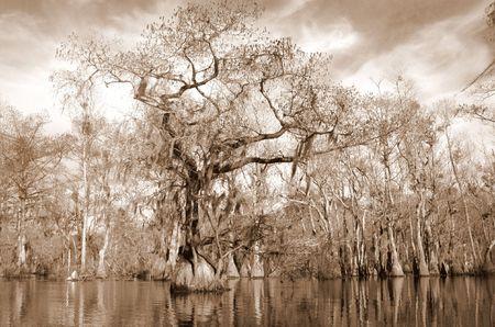 Sepia afbeelding van vollopen Cypress en tupelo Stockfoto
