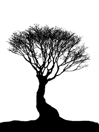 plant stand: Tree Silhouette - bonsai isolated on white