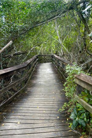 Hiking boardwalk trail - everglades national park photo