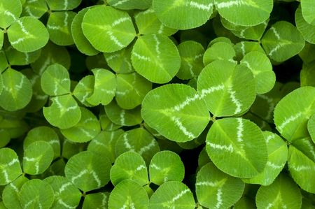 Vibrant Green Clover Patch background for St. Patricks Day photo