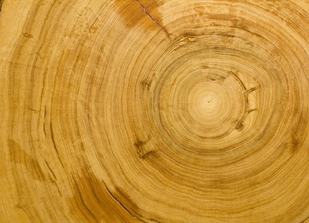 Wood grain texture detailing the tight rings of a 700 year old cypress tree