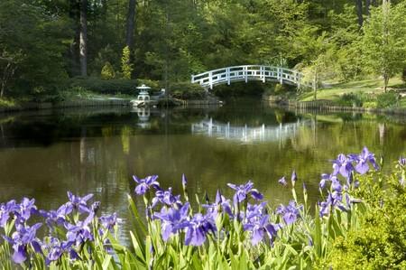 Japanese Zen Garden with moon bridge and purple Iris