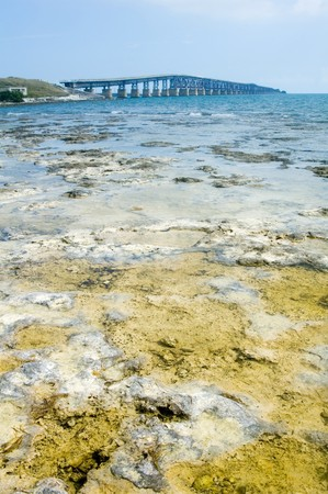 Florida Keys Bridge with coral in foreground photo