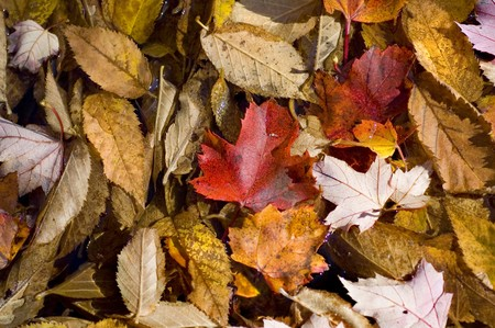 Autumn leaves on Forest Floor, Background texture photo