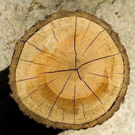 arbol alamo: Registro de corte, textura de fondo veteada