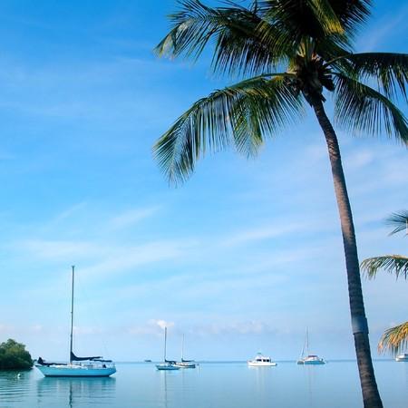 Sailboats and palm tree photo