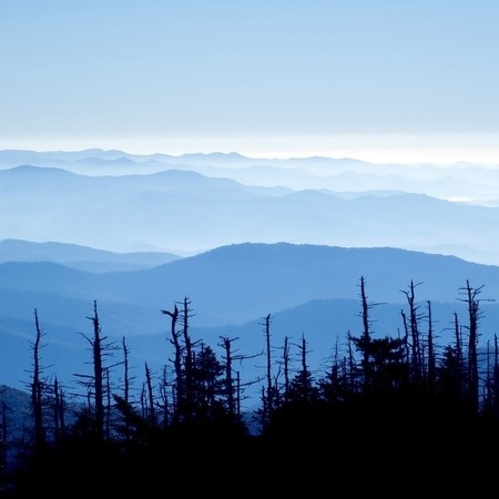 distance: Beautiful view form clingmans dome, Great Smoky Mountians National Park, Tenessee,  Many of the Hemlocks are dying from the Wolly Adelgid disease