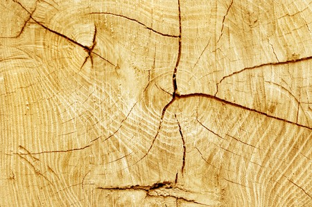 Cut log, woodgrain background texture  Stock Photo