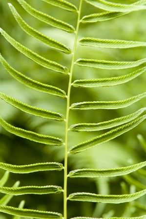 furl: young green fern abstract background