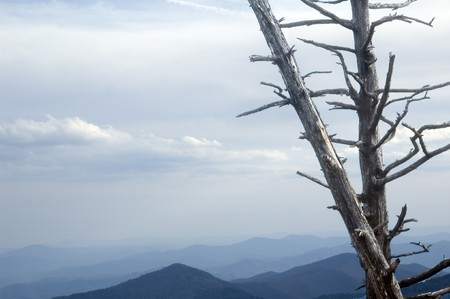 Moutain landscape showing dead tree from acid rain photo