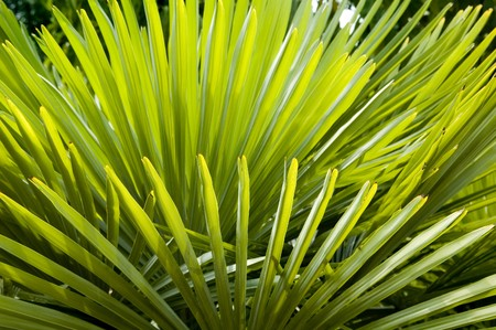 Palm frond Background