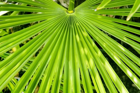 Palm frond Background Stock Photo - 7400672