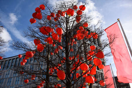 Red Chinese Lanterns suspended in a tree in Liverpool, UK for Chinese New Year celebrations