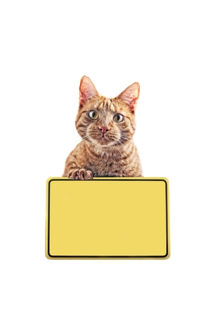 Funny Cat with yelow sign.