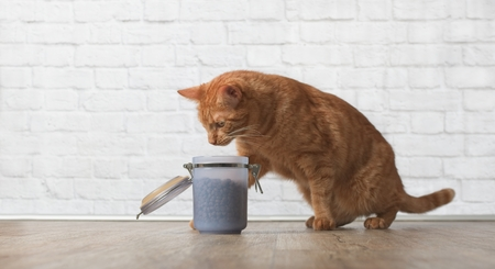 Ginger cat steals dry food on a open food container Stock Photo