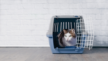 Cute old tabby cat sitting on a crate and look sideways.