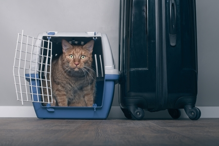 Traveling with a cat - Ginger cat in a pet carrier next to a suitcase.