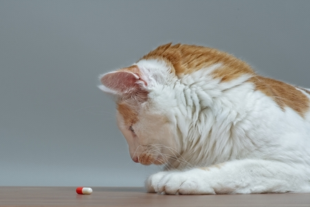 Cute tabby cat looking curious to a medicine capsule. Stock Photo