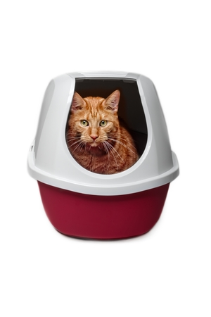 Cute ginger cat using a closed litter box isolated on white