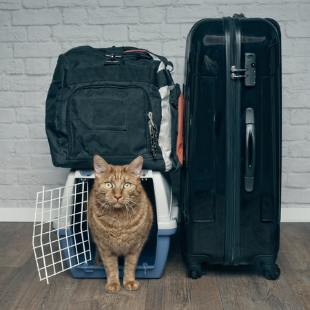 Ginger cat looking anxiously from a pet carrier next to a suitcase.