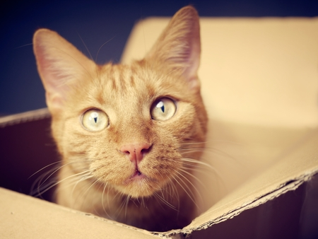 Ginger cat sitting in a cardboard box looking at the camera. Close-up with soft focus. 스톡 콘텐츠