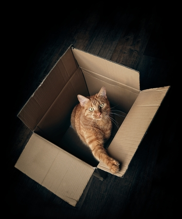 Cute ginger cat in a cardboard box looking curious to the camera. High angle view with copy space.