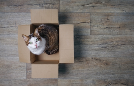 Tabby cat in a cardboard box looking curious up to the camera. High angle view with copy space.