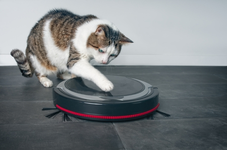 Funny tabby cat playing with a robot vacuum cleaner. Stock Photo