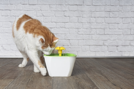Durstige Langhaarkatze, die neugierig auf einen Trinkbrunnen für Haustiere schaut.