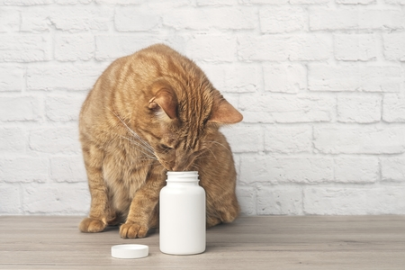 Ginger cat looks curious to an open pill box. Horizontal image with copy space
