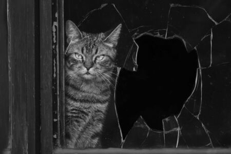 Tabby cat looking through a broken window. black and white image.